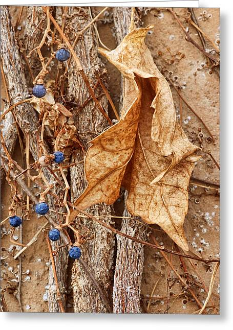 Vine Leaves Greeting Cards - Freeze Dried Greeting Card by Nikolyn McDonald
