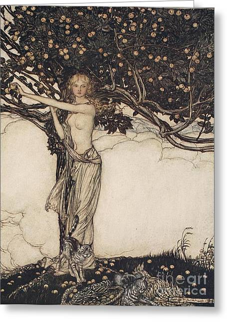 Apple Picking Greeting Cards - Freia the fair one illustration from The Rhinegold and the Valkyrie Greeting Card by Arthur Rackham