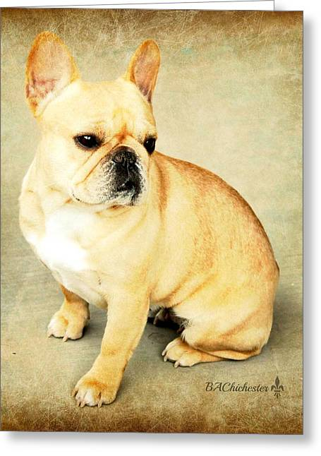 Bully Greeting Cards - French Bulldog Antique Greeting Card by Barbara Chichester