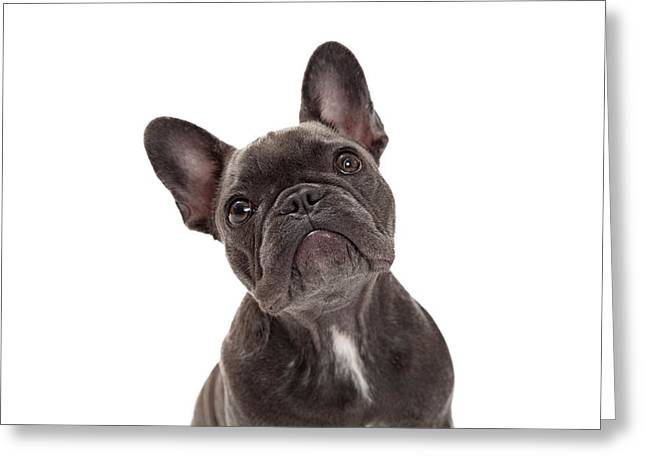 Pedigree Greeting Cards - French Bulldog Closeup Greeting Card by Susan  Schmitz