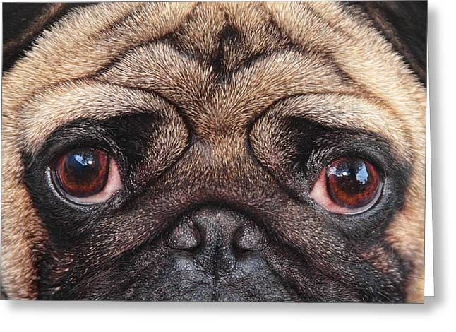 Bulldog Puppies Pictures Greeting Cards - French Bulldog Greeting Card by Martin  Fry