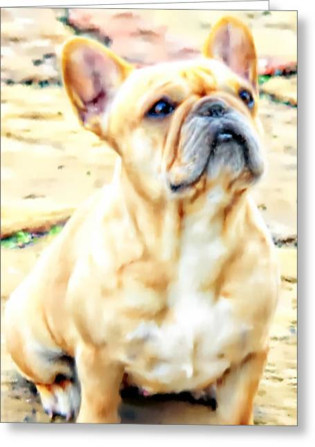 Bully Greeting Cards - French Bulldog Portrait Greeting Card by Barbara Chichester