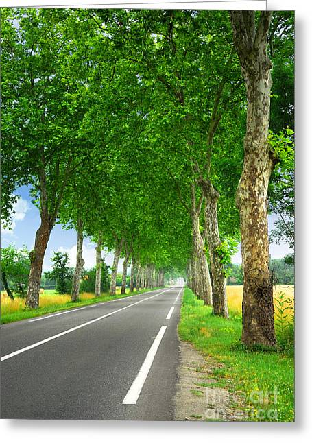 Driving Greeting Cards - French country road Greeting Card by Elena Elisseeva
