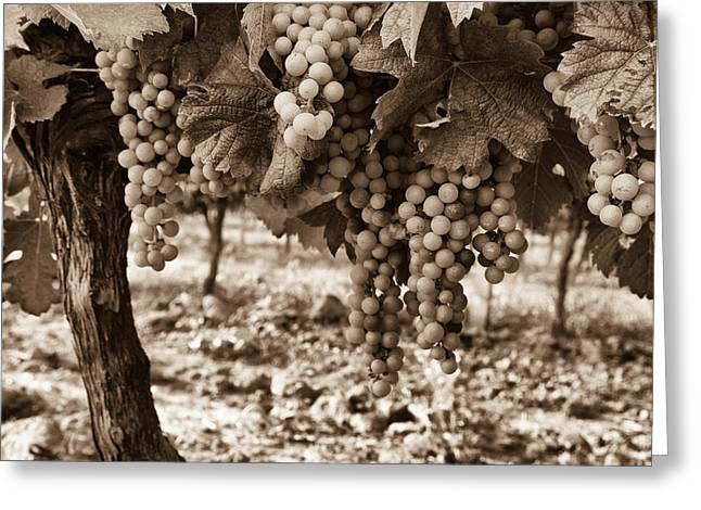 Winery Photography Greeting Cards - French Grapes - Toned Greeting Card by Nomad Art And  Design