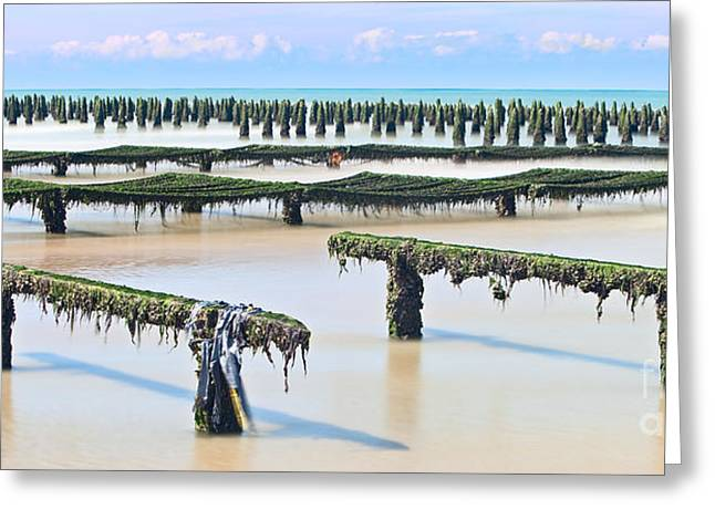 Cultivation Greeting Cards - French mussel aquaculture Greeting Card by Dirk Ercken