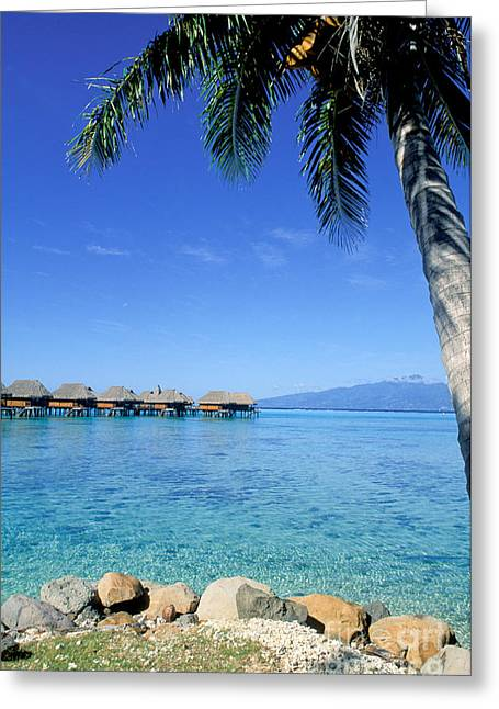 On The Beach Greeting Cards - French Polynesia Tahiti Moorea Greeting Card by Anonymous