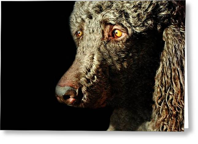 French Poodle Standard Greeting Card by Diana Angstadt
