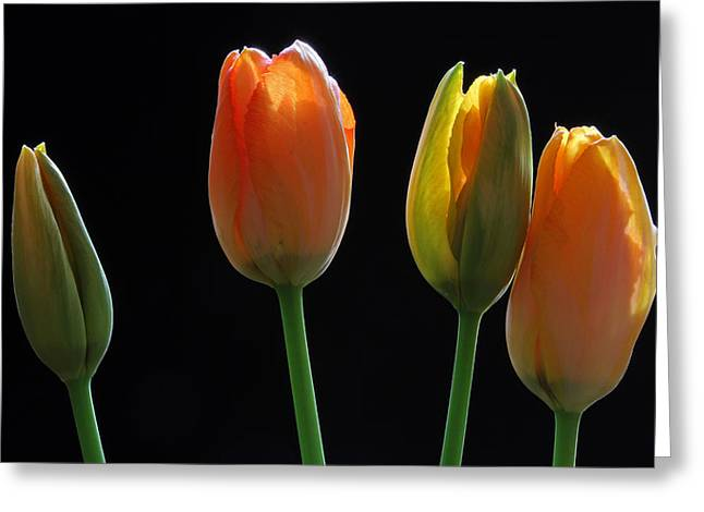 French Tulips Greeting Card by Juergen Roth