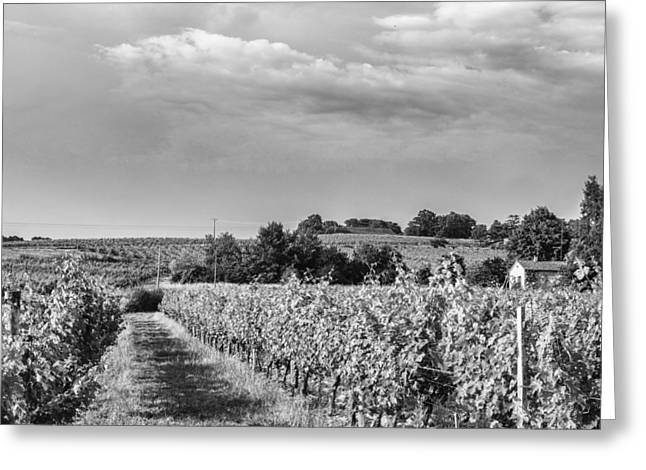 Recently Sold -  - South West France Greeting Cards - French Vineyard in Mono Greeting Card by Nomad Art And  Design