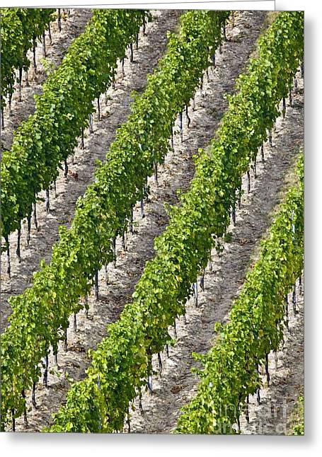 Sparkling Wine Greeting Cards - French Vineyard Greeting Card by Martyn F. Chillmaid