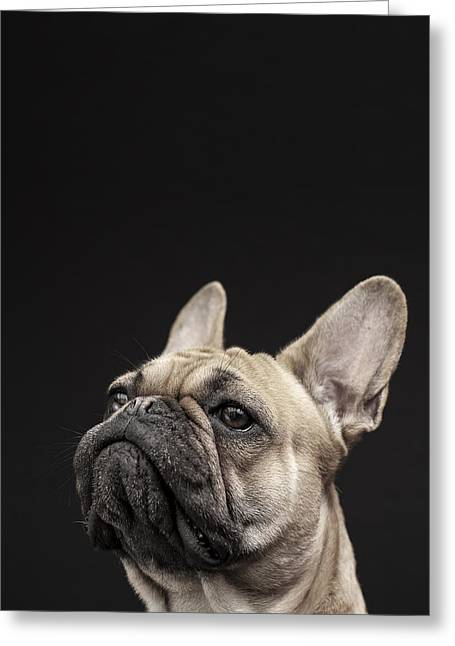 Domesticated Animal Greeting Cards - Frenchie Greeting Card by Samuel Whitton