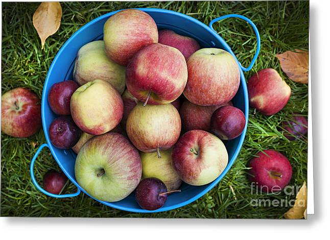Organic Photographs Greeting Cards - Fresh apples Greeting Card by Elena Elisseeva