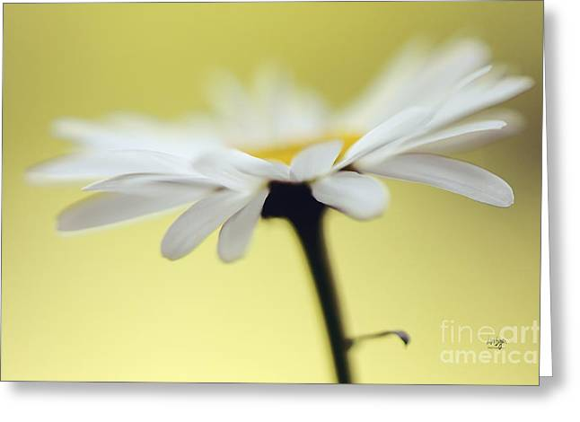 Innocence Greeting Cards - Fresh As A Daisy Greeting Card by Lois Bryan