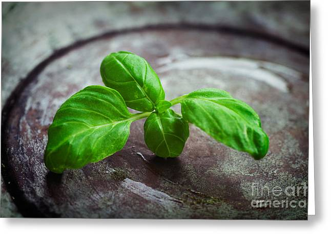 Fresh basil Greeting Card by Mythja  Photography