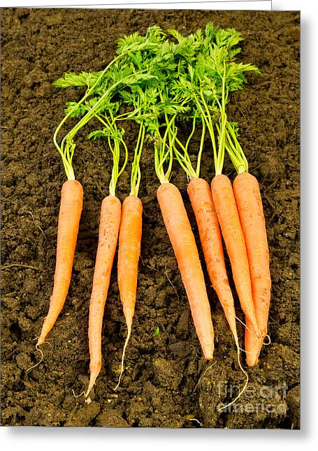 Planting Greeting Cards - Fresh Carrots Greeting Card by Edward Fielding