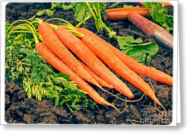 Fresh Vegetables Greeting Cards - Fresh Carrots from the Garden Greeting Card by Edward Fielding