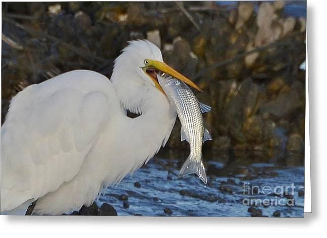 Fresh Catch Greeting Card by Kathy Baccari