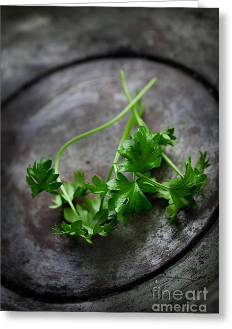 Mythja Greeting Cards - Fresh celery Greeting Card by Mythja  Photography