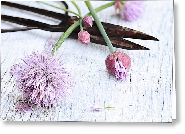 Green Chives Greeting Cards - Fresh Chives And Antique Scissors Greeting Card by Stephanie Frey