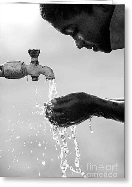 Fresh Clean Water Greeting Card by Tim Gainey