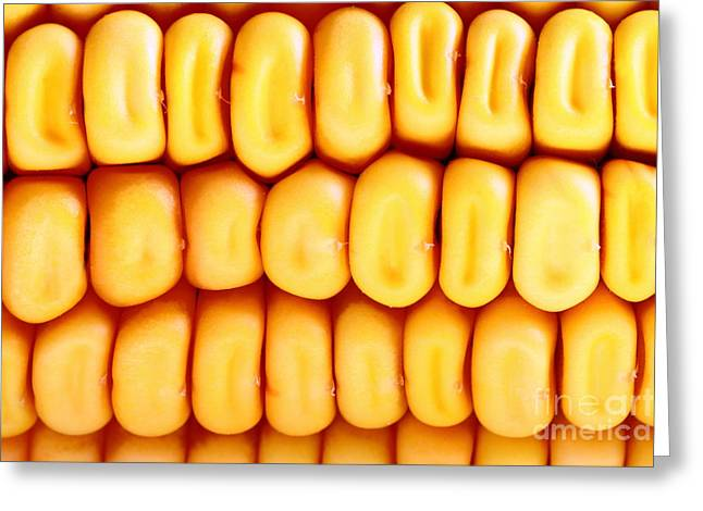Healthy Greeting Cards - Fresh corn background Greeting Card by Gregory DUBUS