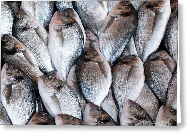 Fresh Fish Greeting Cards - Fresh Fish 03 Greeting Card by Rick Piper Photography