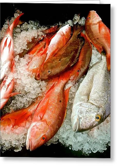Mutton Snapper Greeting Cards - Fresh Fish 2 Greeting Card by Joe Wyman