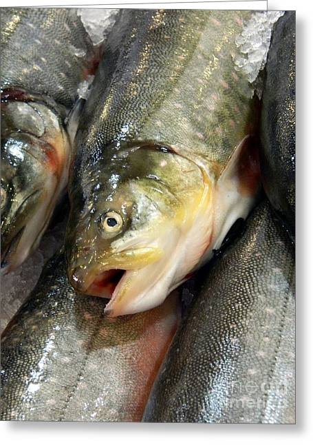 Monger Greeting Cards - Fresh Fish Greeting Card by Chalet Roome-Rigdon