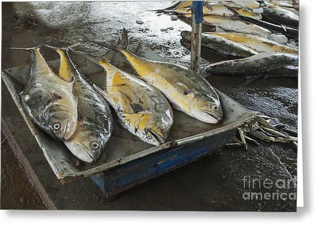 Fresh Fish Greeting Cards - Fresh fish for sale Greeting Card by Patricia Hofmeester