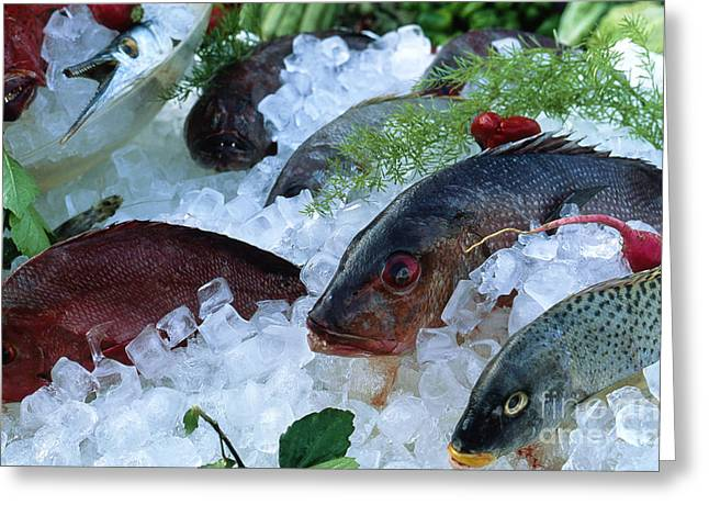 Edibles Greeting Cards - Fresh Fish Greeting Card by Heiko Koehrer-Wagner