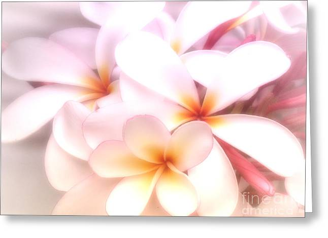 Fresh Frangipani Greeting Card by Karen Lewis