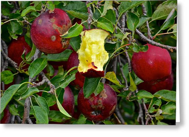Canned Fruit Greeting Cards - Fresh Fruit Greeting Card by Frozen in Time Fine Art Photography