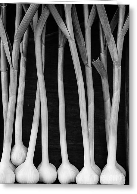 Supermarket Greeting Cards - Fresh Garlic Bulbs Black and White Greeting Card by Edward Fielding
