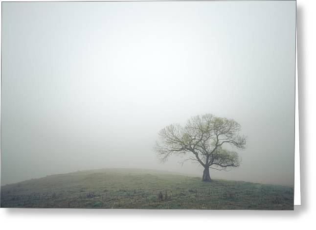 Back Country Greeting Cards - Fresh Green and Morning Fog Greeting Card by Alexander Kunz