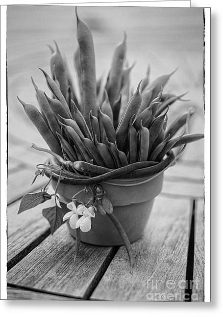 Owner Greeting Cards - Fresh Green Beans in Pot Greeting Card by Iris Richardson