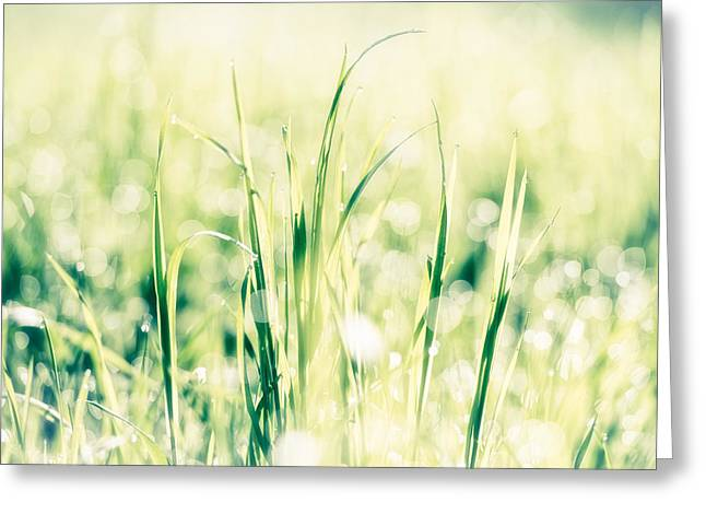 Culm Greeting Cards - Fresh green grass in bright light Greeting Card by Matthias Hauser