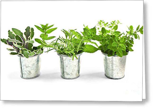 Culinary Photographs Greeting Cards - Fresh herbs in pots Greeting Card by Elena Elisseeva
