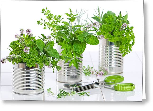 Organic Photographs Greeting Cards - Fresh Herbs In Recycled Cans Greeting Card by Amanda And Christopher Elwell