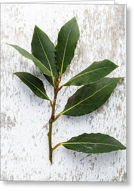 Ingredients Greeting Cards - Fresh Laurel Greeting Card by Nailia Schwarz