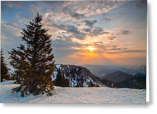 Pines Greeting Cards - Fresh morning Greeting Card by Davorin Mance