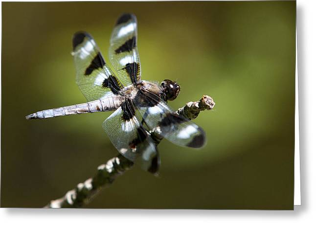 Dragonflies Greeting Cards - Fresh Morning Dragonfly Greeting Card by Christina Rollo
