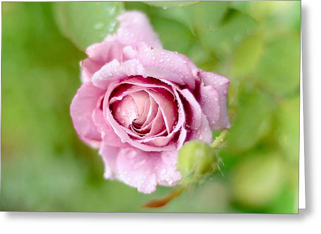 Lush Green Greeting Cards - Fresh Morning Rose Greeting Card by Jenny Rainbow