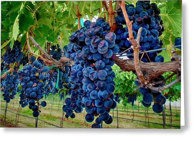 Clusters Of Grapes Greeting Cards - Fresh on the Vine Greeting Card by Kristina Deane