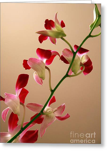 Recently Sold -  - Abstract Nature Greeting Cards - Fresh orchids closeup  Greeting Card by IB Photo