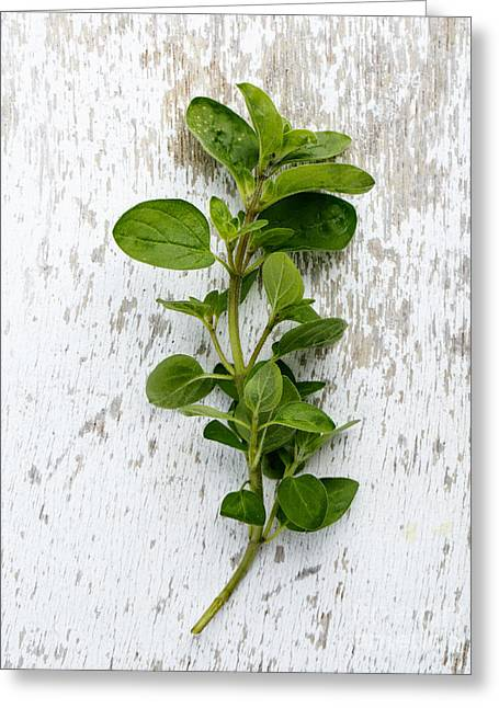 Prepared Greeting Cards - Fresh Oregano Greeting Card by Nailia Schwarz