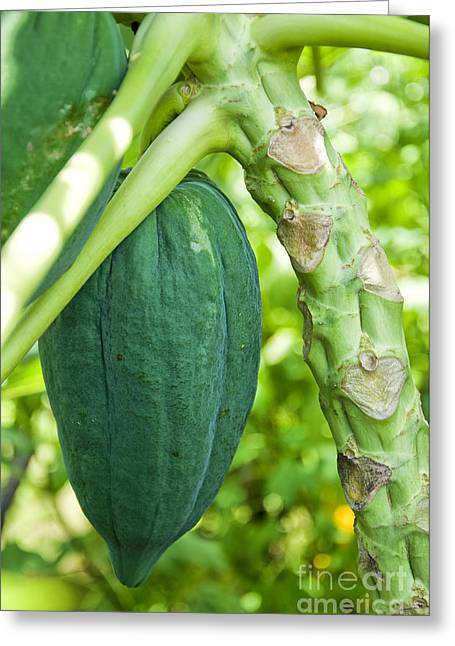 Papayas Greeting Cards - Fresh papaya Greeting Card by Antony McAulay
