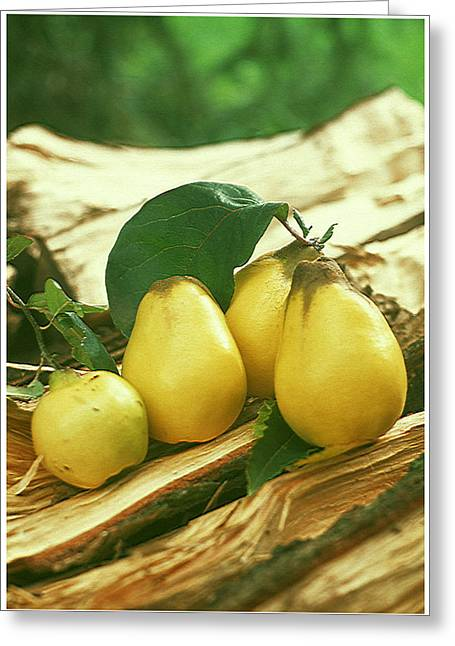 Organic Greeting Cards - Fresh pears  Greeting Card by Lanjee Chee