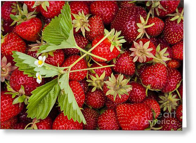 Organic Photographs Greeting Cards - Fresh picked strawberries Greeting Card by Elena Elisseeva