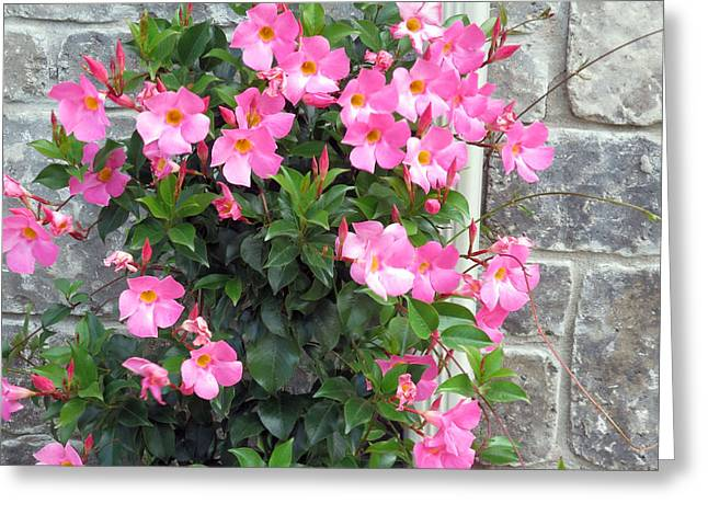 Signature Mixed Media Greeting Cards - Fresh Pink Flowers blossom supporting the tiled wall nature natural gardens     Greeting Card by Navin Joshi