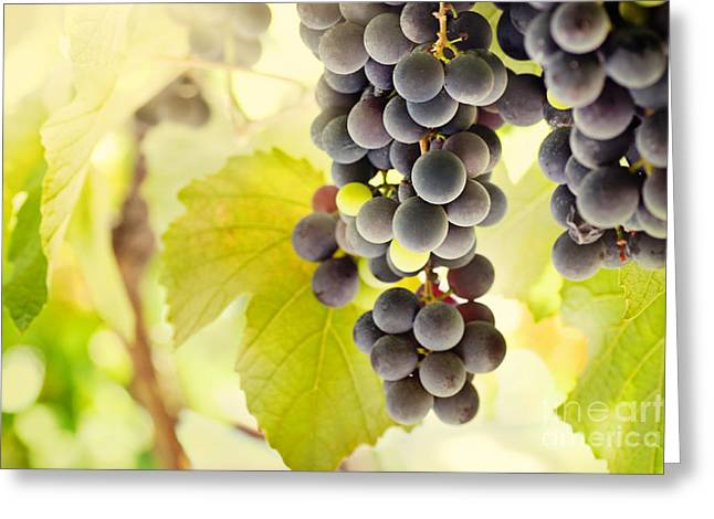 Fresh ripe grapes Greeting Card by Mythja  Photography